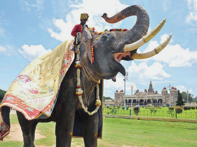 Can Jamboo Savari roll on this year? Meeting to decide