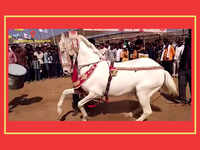 Chetak 2018: A festival of horse lovers and traders in Nandurbar