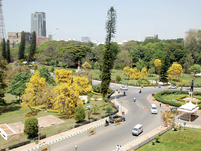 These 200 trees are eating up Bengaluru