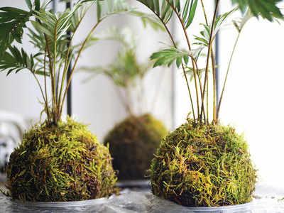 CHECK OUT: Make a hanging garden