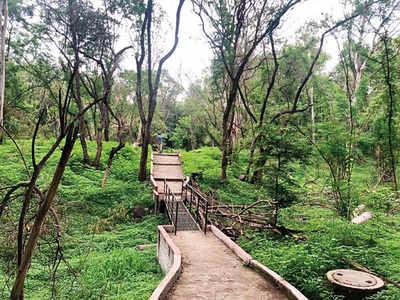 'Tree saviour' Sena wants to chop 1,000 in Aurangabad