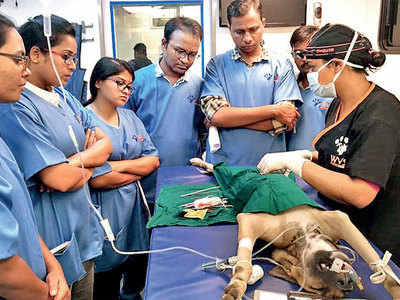 PMC organises special training for vets working on ABC initiative