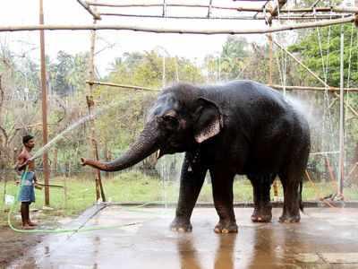 Madras High Court allows mercy killing of ailing Salem temple elephant