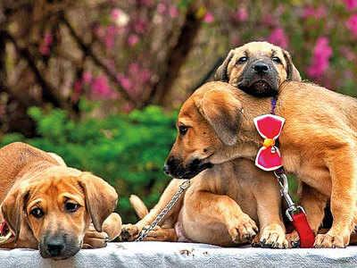 PLAN AHEAD: Adopt a pet