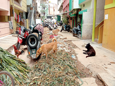 Bengaluru: From torn roads to mosquitoes and garbage, Nagappa Street is a stretch full of woes