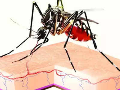 Delhi-NCR news: Jump in viral, dengue cases after rains in national capital