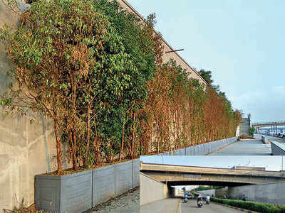 Soon, riverfront walls to go green
