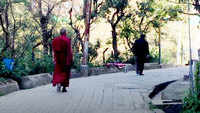 Over 150 monks test COVID positive at Himachal Pradesh monastery