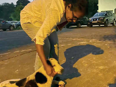 Driver runs over stray dog in BBMP head office premises