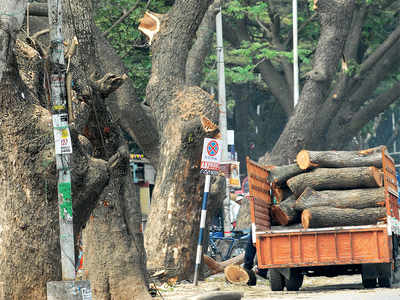 Forest Department strips Tree Committee of all its powers