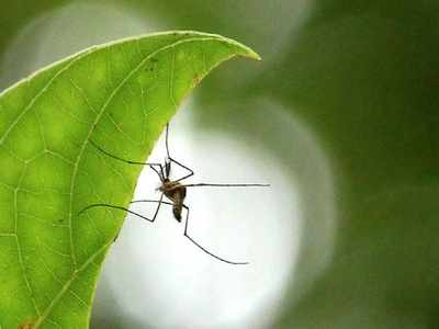 Telangana government cancels leaves for doctors, staff for two months to tackle dengue, fevers