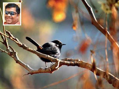 The new black (bird)