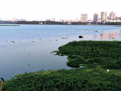 Powai lake hasn't been cleaned for over a year