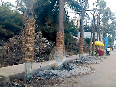 Sarjapura Road trees will live a little more