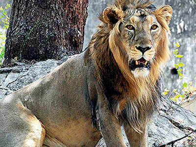 Translocate lions to Kuno: MP CM to PM