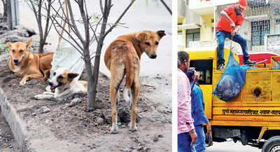Only 20% of plaints on strays in PMC portal worth resolving