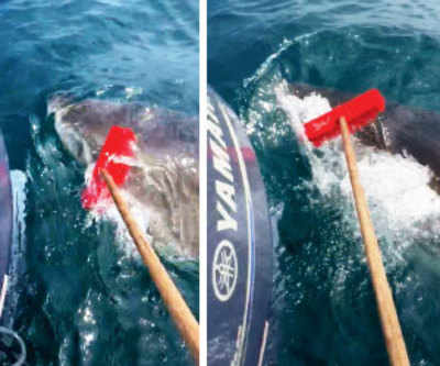 Fisherman fights off shark with garden broom