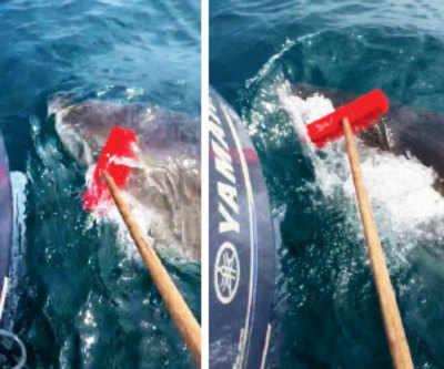 Fisherman fights off shark with garden broom