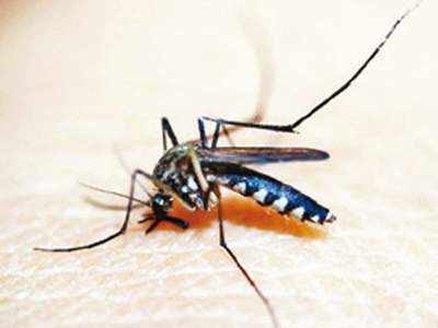 China declared malaria-free after 70-year fight: WHO