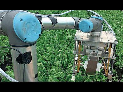 Vegebot uses machine learning to harvest crop