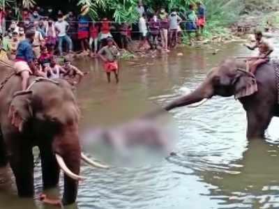 Elephant killing: Prakash Javadekar assures strict action against those behind cruel act