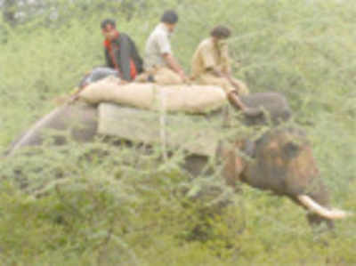 Elephant patrol to prevent poachers at tiger reserves