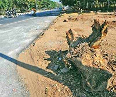 A 100 Trees Hacked On Road To Vibrant