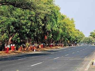 8,000 trees to pay the price for wider road for VIPs; residents and activists cry foul