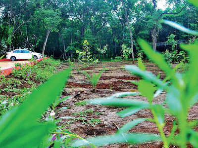 Replica of W Ghats forest recreated in a city backyard