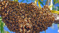 Bees attack Telangana school, 20 kids taken to hospital
