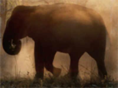 Save elephants, grow a crop: Managing man-animal conflict