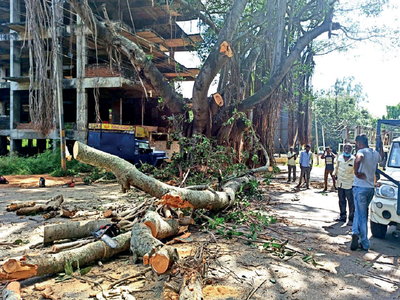 Mysuru: Trees cut to size to make way for double-decker bus