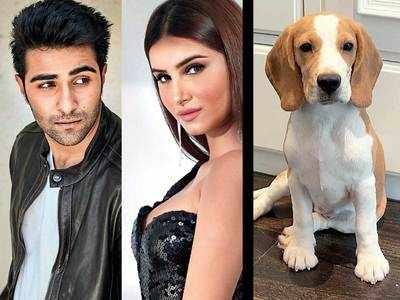 Tara Sutaria and Aadar Jain's puppy love