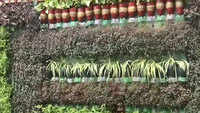 Environmentalist from J&K creates beautiful vertical garden from plastic waste