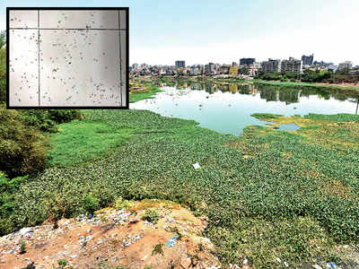 Mosquitoes have a field day in Kharadi as Pune Municipal Corporation fails clean-up act