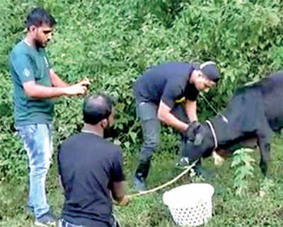 Karnataka: From ravaged villages, they ACT by rescuing animals