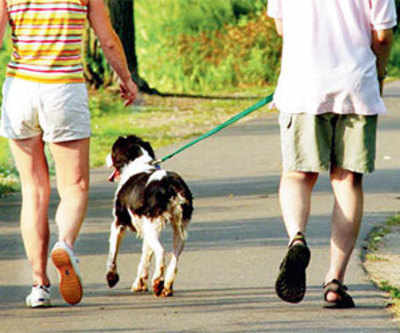Spain campaign collects dog poo for DNA index