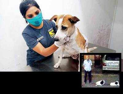 Covert op helps rescue stray from security guard