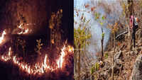 Odisha forest fire: Wildfire threatens to cause colossal damage to biosphere in Similipal Tiger Reserve