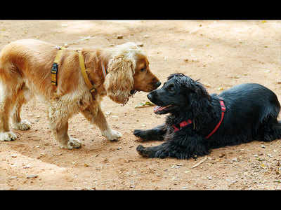 Should laws on cruelty against animals be made more stringent?
