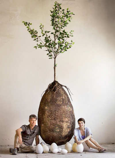 Green burial: Family Tree has a whole new meaning