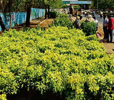 BBMP goes e-way: Check this app out, get saplings free