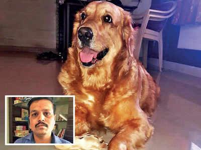 FIR against 'bogus' vet as pet dog dies