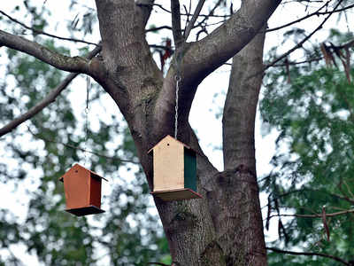 Hsg soc in Jambhe looks out for birds