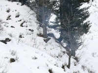 Jammu & Kashmir: Doda receives fresh spell of snowfall