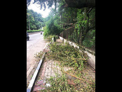 Fallen tree branches near stn need clearing