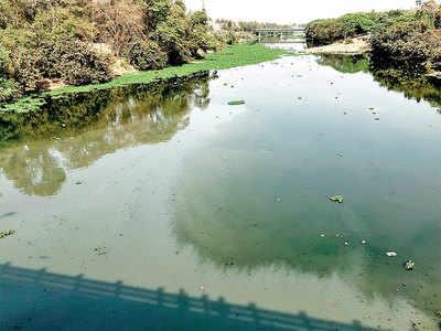 Birds in Mula fight pollution