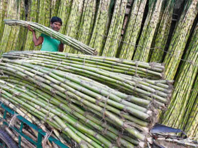Taste bamboo biryani at the Annual Bamboo Fair