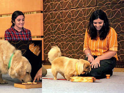A pet-friendly Diwali? It's possible