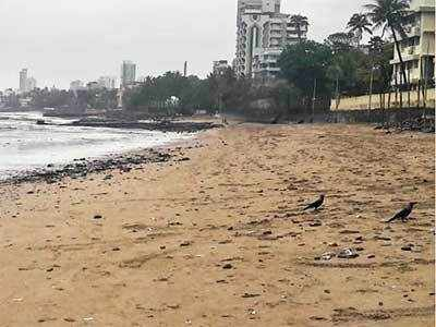 Mumbai celebrates first anniversary of Dadar beach clean-up drive